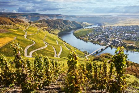 Moselland - Piesport view of river and vineyards