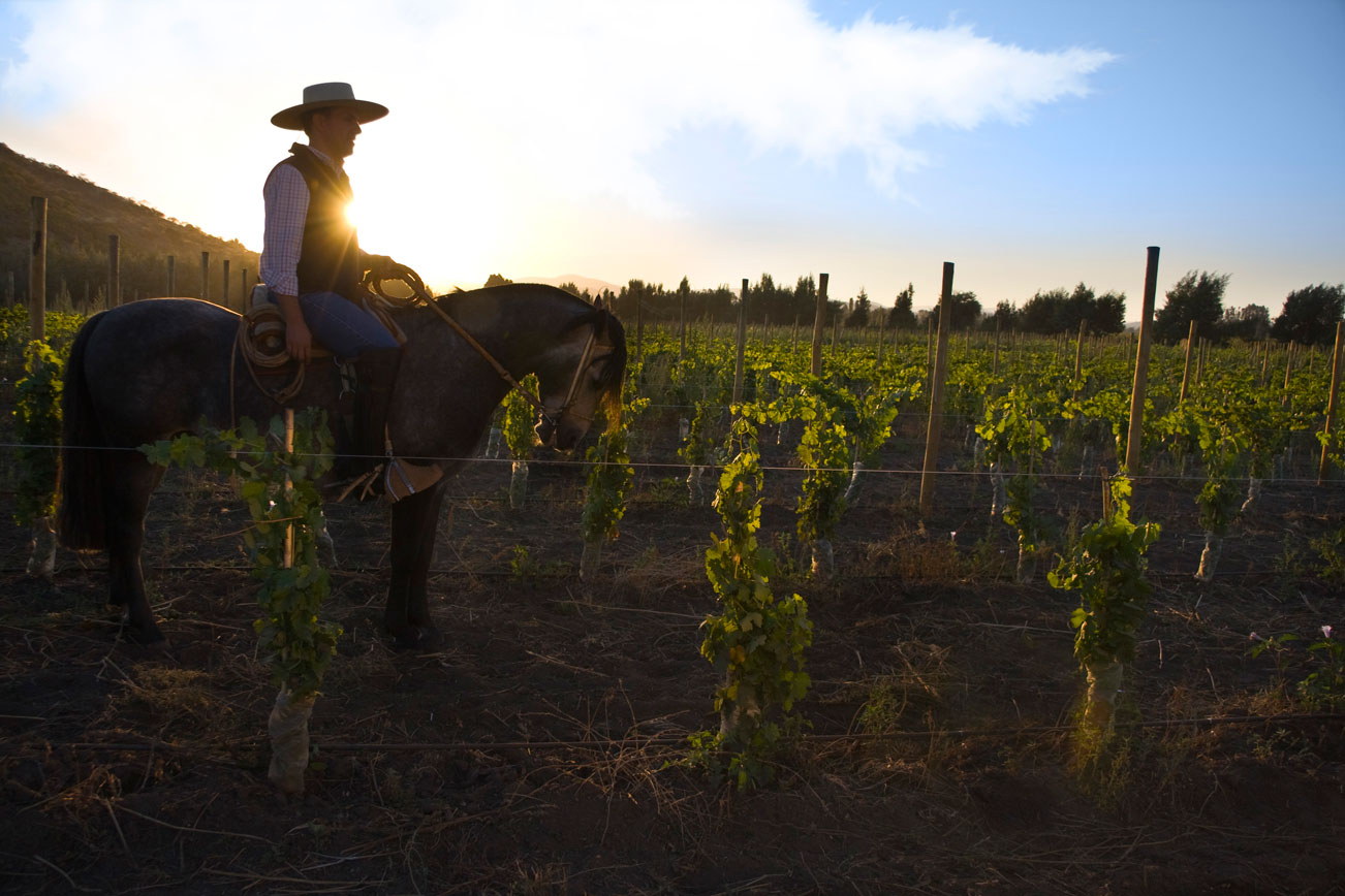 Horseback vineyard worker